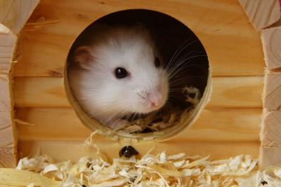 Hamster Cage Inside
