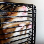 What to Do About Hamster Cage Bar Gnawing