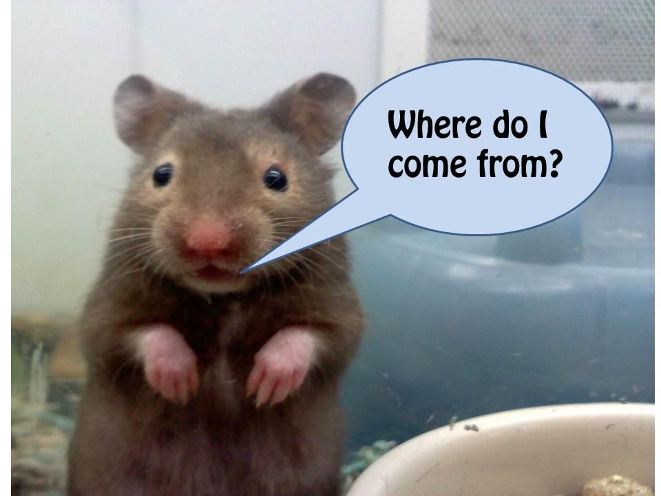 You Porn Hamster